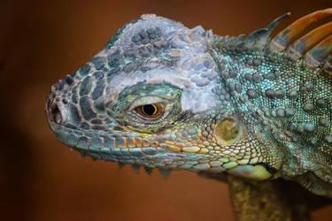 Lizard by DenChetto