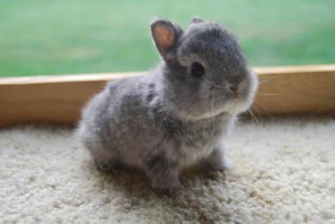 Baby Bunny by danni-luckystar