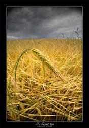 It's harvest time by tyranus82