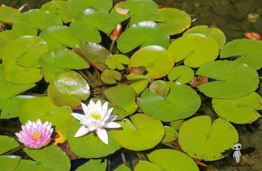 Chinese Garden-Lilly 1 by IvanCauldwellart
