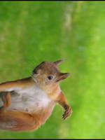 orava - a squirrel by tng05