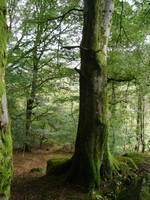 Forest_moss_trees_1 by GoblinStock