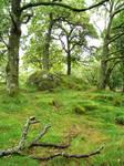 Ireland moss by GoblinStock