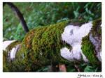 Rainforest_3 by GoblinStock