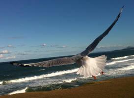 Seagull 17 by GoblinStock