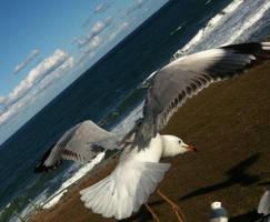 Seagull 18 by GoblinStock