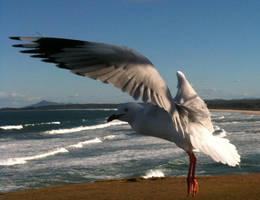 Seagull 19 by GoblinStock