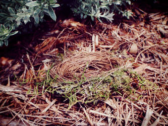Empty Nest by GoblinStock