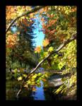 Riverside Maple by katherineannecarlson