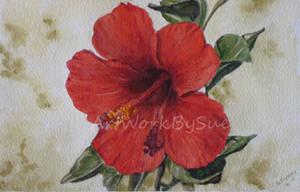 Hybiscus Flower by SueMArt