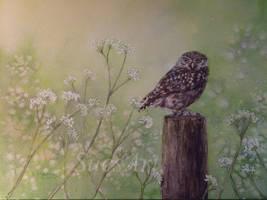 Little Owl. by SueMArt