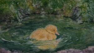 Yellow Duckling. by SueMArt
