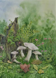 Glorious Mushrooms. by SueMArt