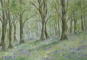 Forest Bluebells. by SueMArt