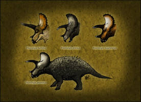 Triceratops species by TheJuras