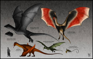 Draconia : Dragons of The World by TheJuras