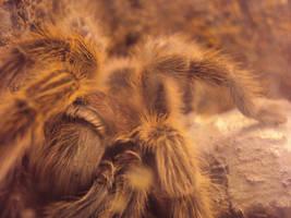 Tarantula by Slytherin-Decepticon