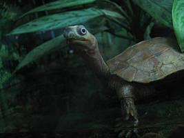 STORYBOOK TURTLE by CorazondeDios