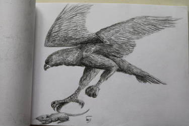 Eagle Hunt by Shayaga
