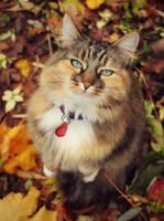 Elsie in Autumn by micromeg