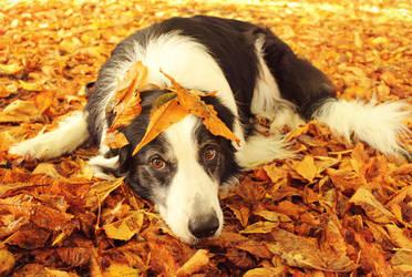 Fallen Leaves by micromeg