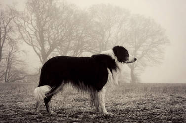 Dog in the Fog by micromeg
