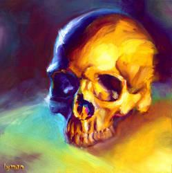 Skull Still Life I by MegLyman