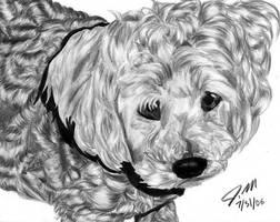 Dog by carlotta-guidicelli