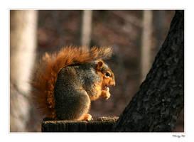 Morning Nut by ladynightseduction