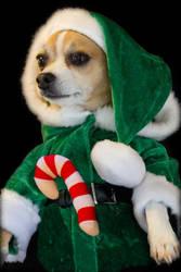 Elf in Training by mim304