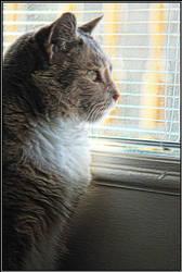 Miss Kitty by mim304