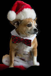 Eddie's Christmas Card 2016 by mim304