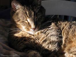 Lazy Sunday II by Cinnamoncandy