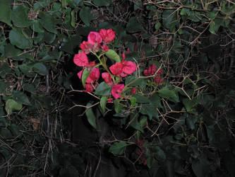 pink flowers 1 by mollynprecious