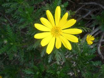Yellow by mollynprecious