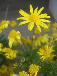 Flower by mollynprecious
