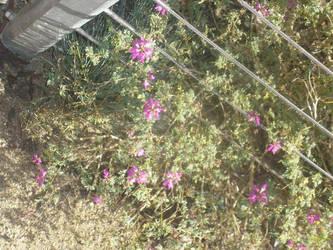 Purple Flower by mollynprecious