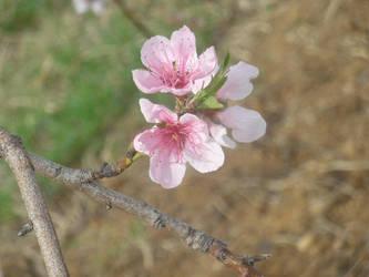 Pink Flower by mollynprecious