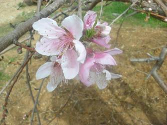 Flower 5 by mollynprecious