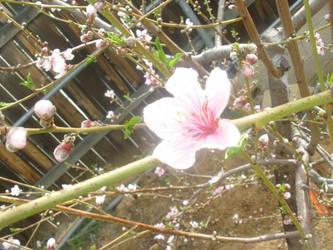 Flower 3 by mollynprecious