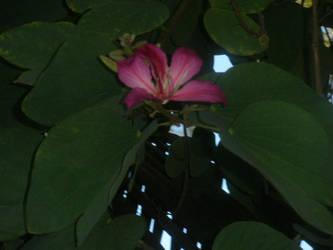 Flower 2 by mollynprecious