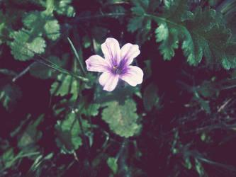 Pretty flower by mollynprecious