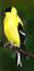 American Goldfinch by mjorlkmaid