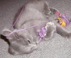 KITTEN Gary and yarn by Nny-Humper