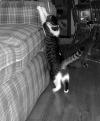 Cornelius Stretch by Nny-Humper