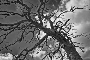 Tree by ElectricSixx