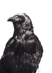 Owl, Cat, Crow Part 3 by ZoeStanleyArts