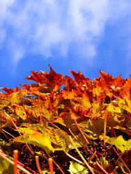 autumn by Chachiko
