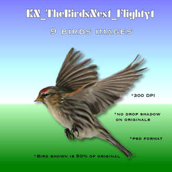 The Birds Nest Flighty 1, by Kathryn DesRoches by FantasiesRealmMarket