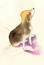 Watercolor: Beagle by muttiy